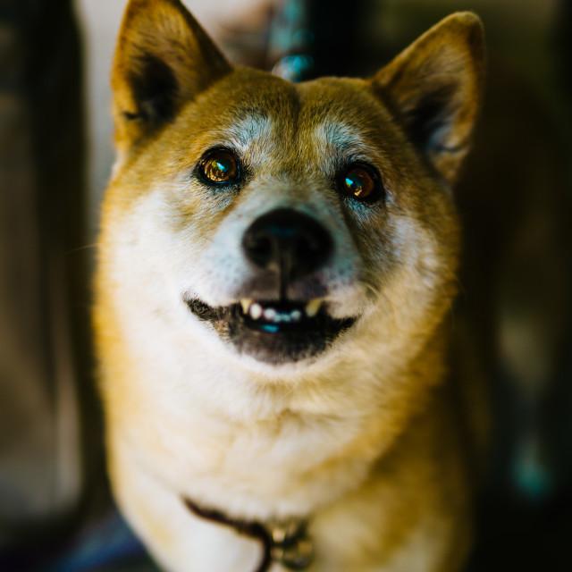 """Good boy"" stock image"
