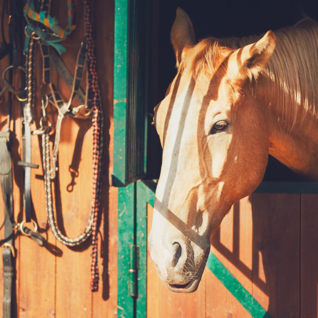 """Horse in contemporary stable"" stock image"