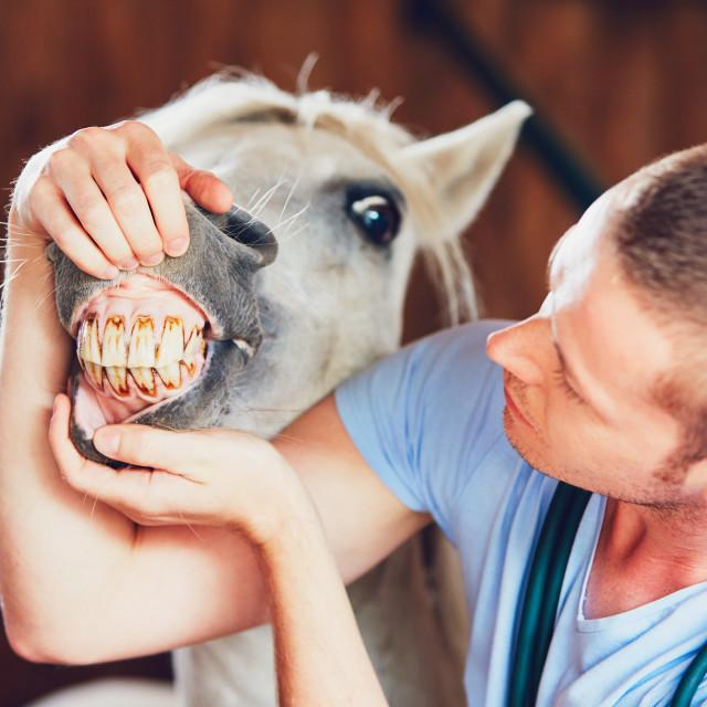 """Veterinary medicine at farm"" stock image"