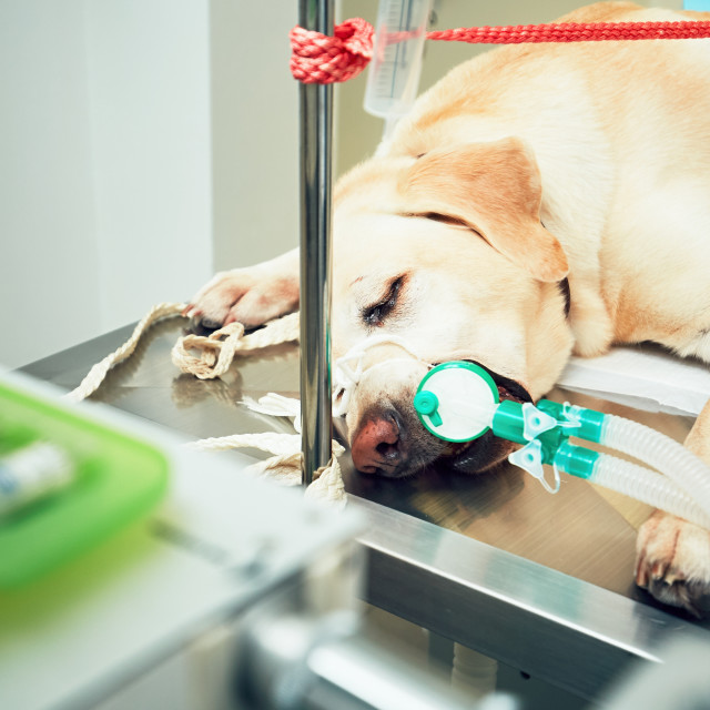 """Old dog in animal hospital"" stock image"