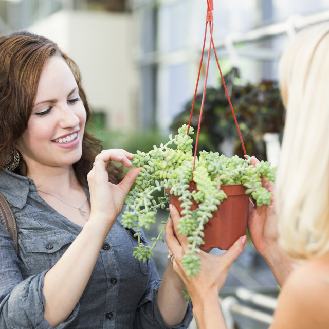 """Two girlfriends looking at plants at an indoor greenhouse; St. Albert,..."" stock image"