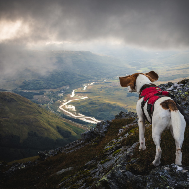 """Beagle Mountain Adventure"" stock image"