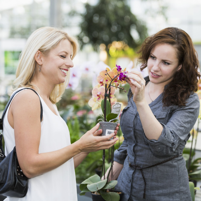 """Two girlfriends looking at plants at indoor greenhouse; St. Albert, Alberta,..."" stock image"