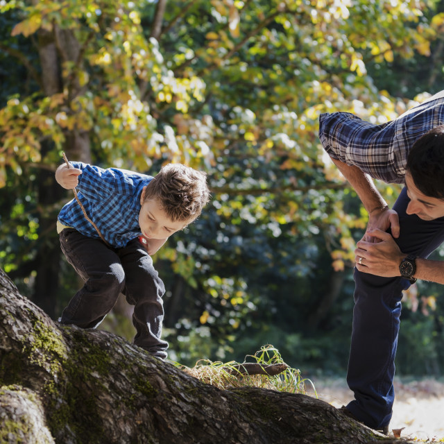 """""""Father and son looking at an insect on large oak tree in rainforest; Langley,..."""" stock image"""
