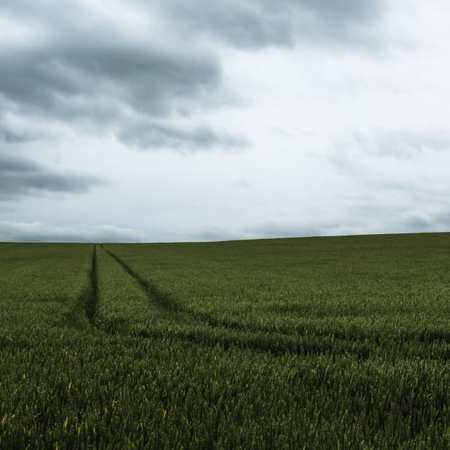 """""""Horizon"""" stock image"""