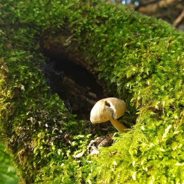 """""""Fungus"""" stock image"""