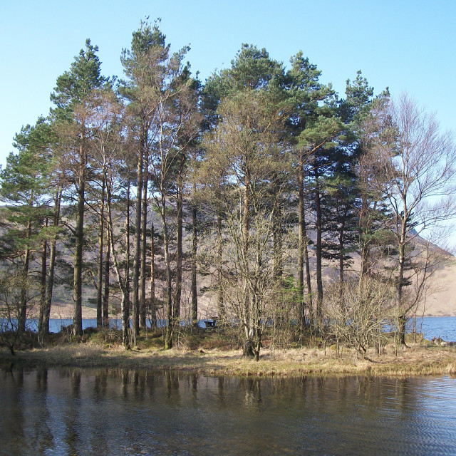 """Trees at Ennerdale Water"" stock image"