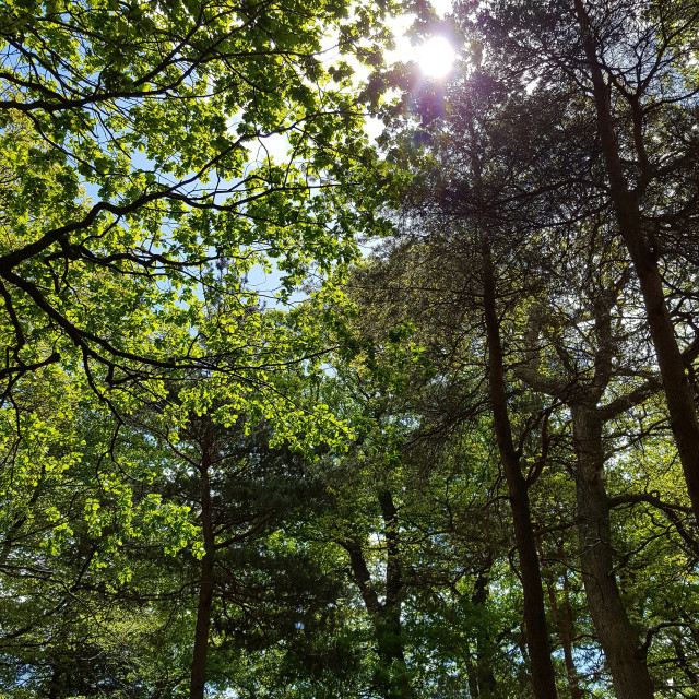 """Sunlight through the trees"" stock image"