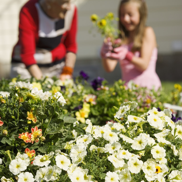 """Grandmother And Granddaughter Gardening"" stock image"