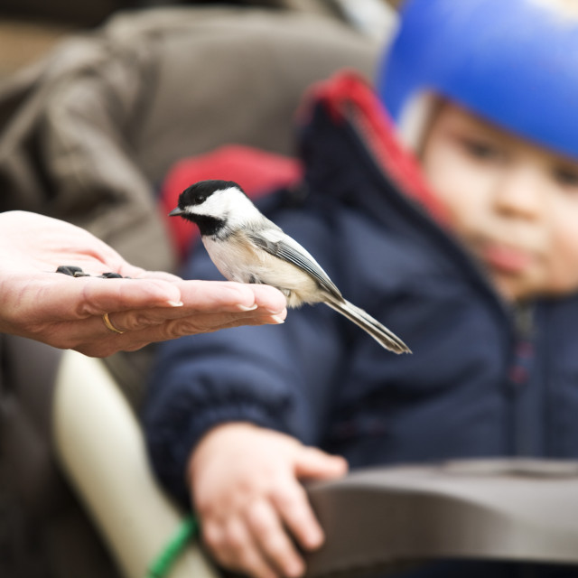 """""""A Bird Eating Out Of A Person's Hand"""" stock image"""