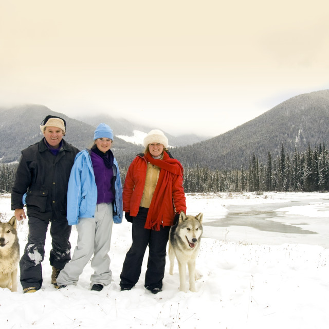 """""""Australian Tourists In British Columbia, Canada, Standing Next To Wolves"""" stock image"""