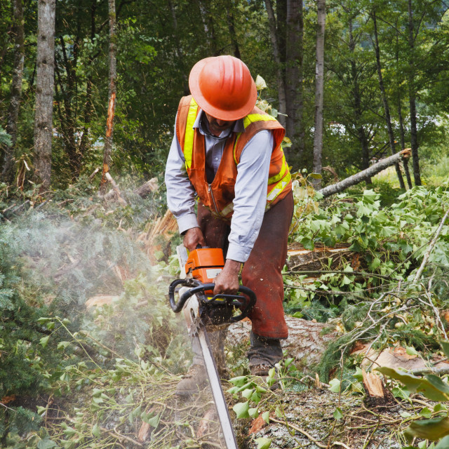 """""""A Logger Uses A Chain Saw To Cut Trees; Portland, Oregon, United States of..."""" stock image"""