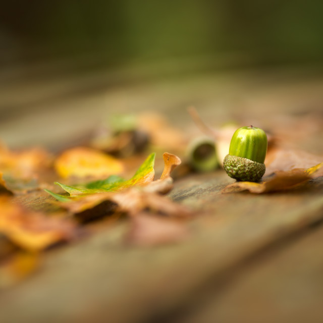 """Autumn Begins"" stock image"