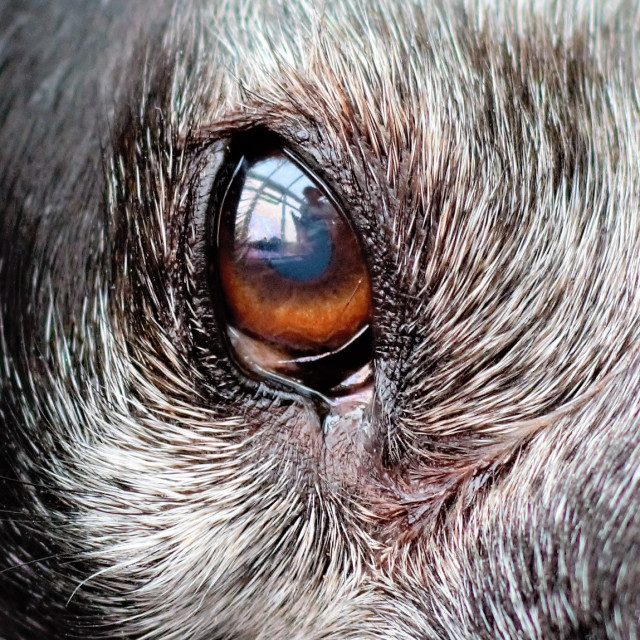 """""""Reflections in her eye"""" stock image"""