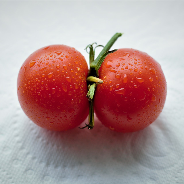 """""""Conjoined tomatoes"""" stock image"""
