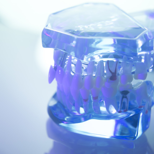 """Dental teeth dentists model"" stock image"