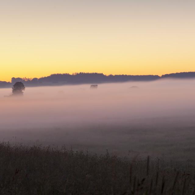 """""""Early morning fog, landscape near Bad Buchau, Upper Swabia,..."""" stock image"""