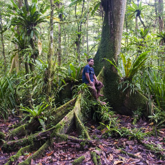 """Man sitting in the Yela Ka forest conservation area of ka trees (Terminalia..."" stock image"