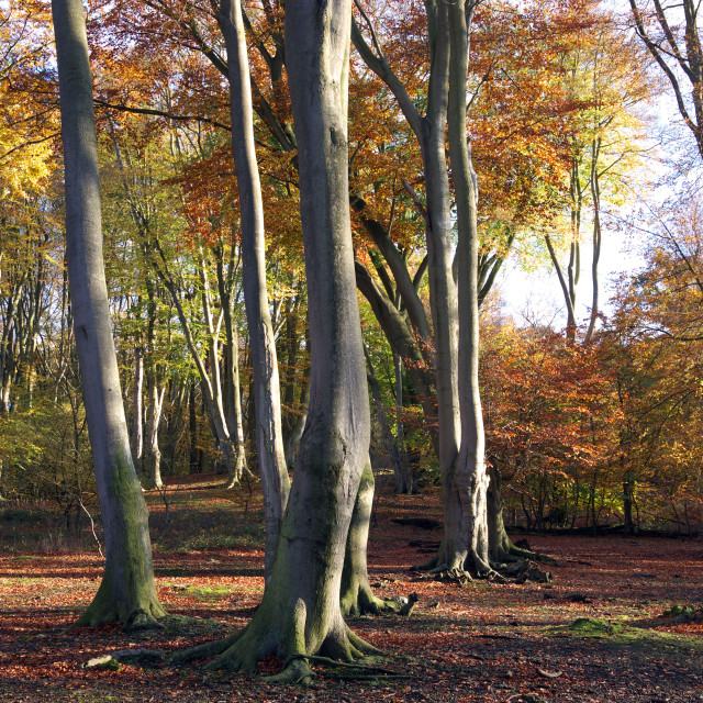 """""""Autumn in Epping forest"""" stock image"""