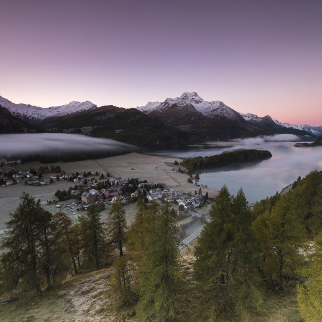 """Pink sky at sunrise and mist on the lake and alpine village of Sils, Canton..."" stock image"