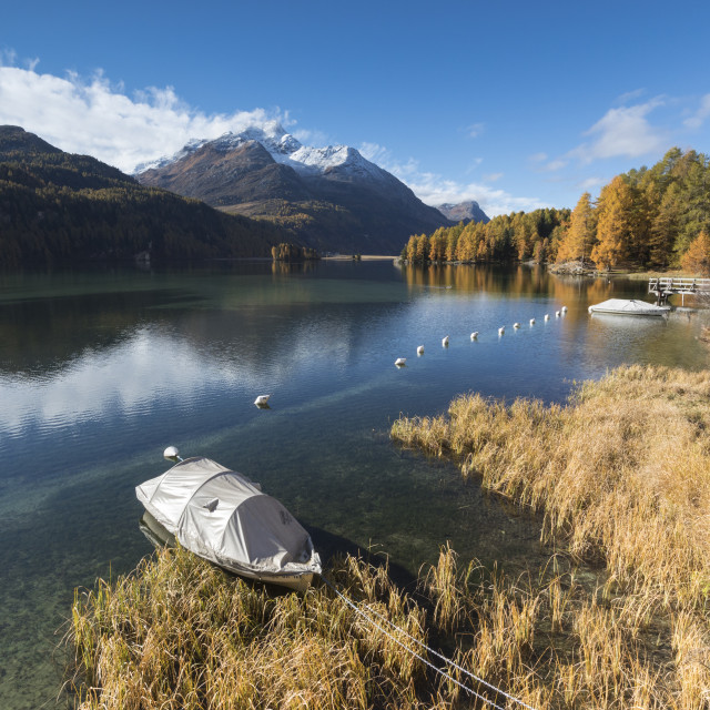 """Colorful woods reflected in Lake Sils during autumn, Maloja, Canton of..."" stock image"