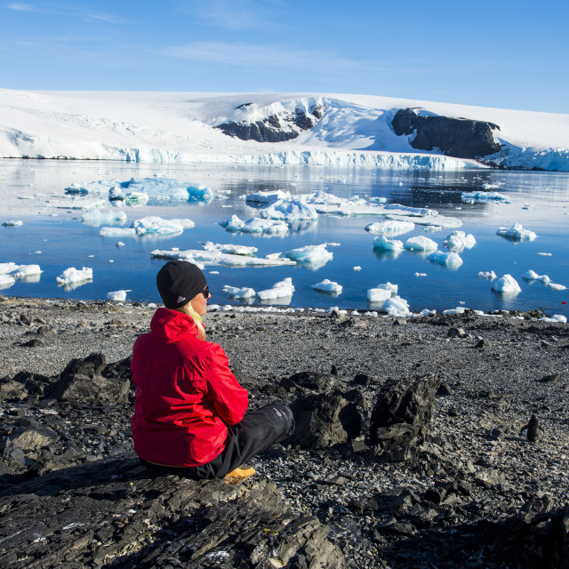"""""""Tourist admiring the beautiful bay filled with icebergs in Hope Bay,..."""" stock image"""