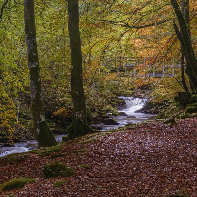 """Autumn in the Birks of Aberfeldy, Scottish Highlands, Scotland, United..."" stock image"
