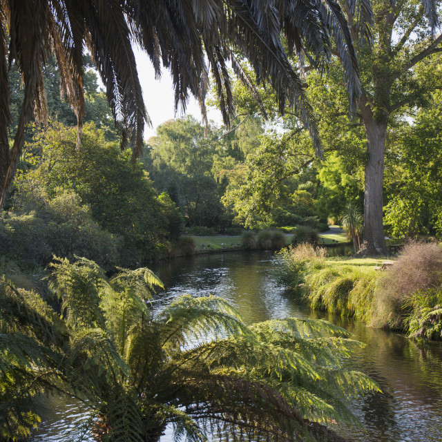 """View along the palm-fringed Avon River in Christchurch Botanic Gardens,..."" stock image"