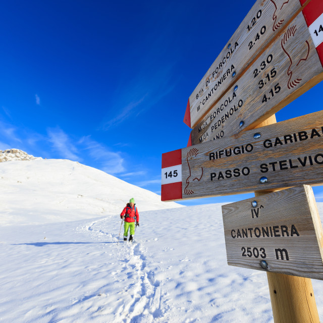 """""""Hiker with snowshoe proceeds on the path covered with snow Braulio Valley..."""" stock image"""