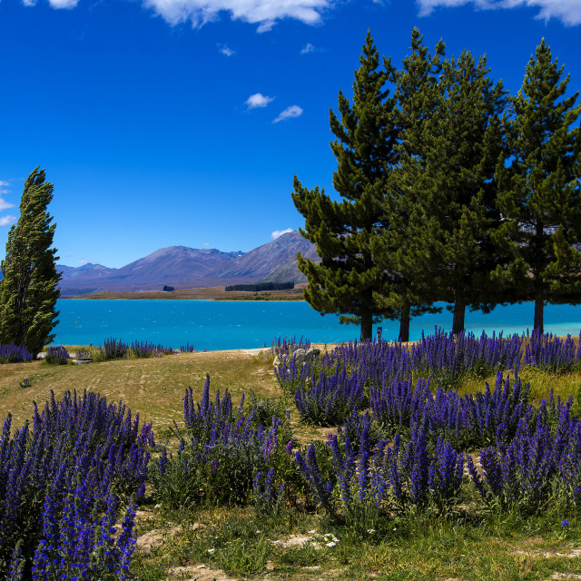 """Lake Tekapo, Mackenzie Country, Canterbury, South Island, New Zealand."" stock image"
