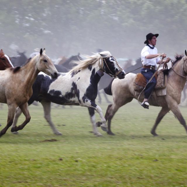 """Gaucho festival on the Day of Tradition, San Antonio de Areco, La Pampa,..."" stock image"