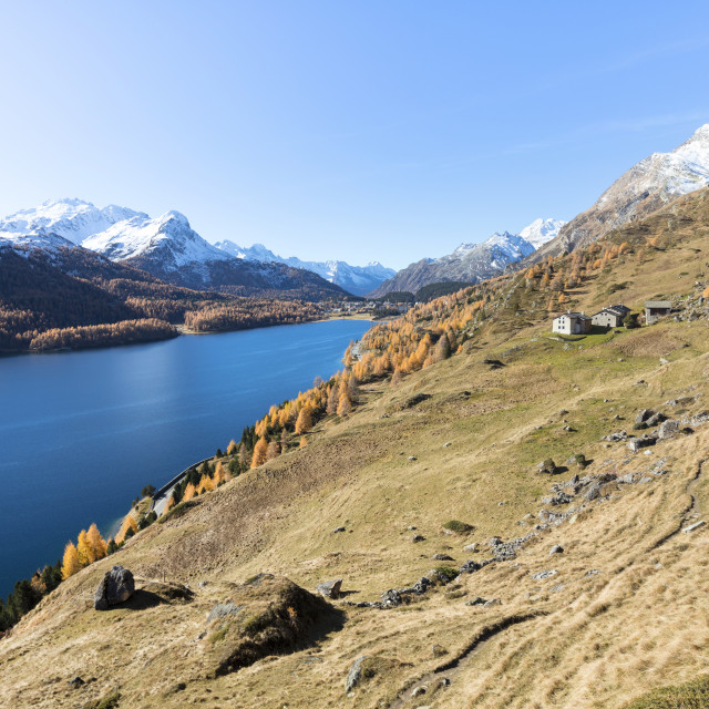"""Colorful woods around Lake Sils and the mountain huts of Spluga, Sils,..."" stock image"