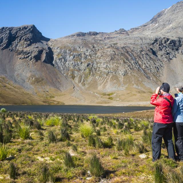 """Woman admiring the beautiful scenery of Godthul, South Georgia, Antarctica,..."" stock image"