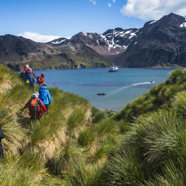 """Tourists hiking in Godthul, South Georgia, Antarctica, Polar Regions"" stock image"