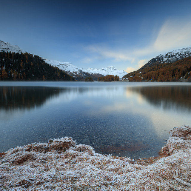 """The colorful woods and snowy peaks are reflected in Lake Sils at dawn Maloja..."" stock image"