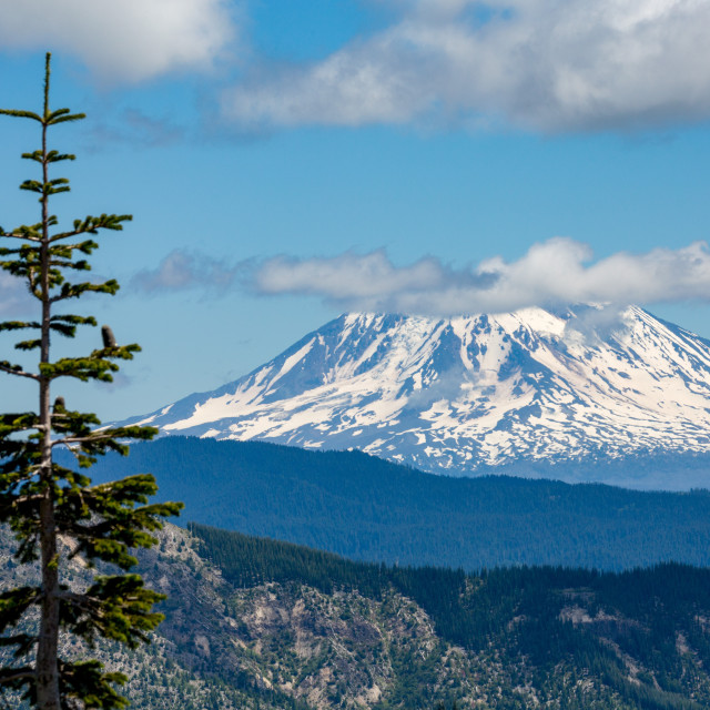 """Mount Adams seen from Mount St Helens, part of the Cascade Range, Pacific..."" stock image"