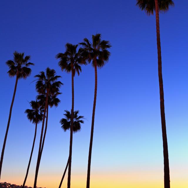 """Palm trees, La Jolla Shores Beach, La Jolla, San Diego, california, USA"" stock image"