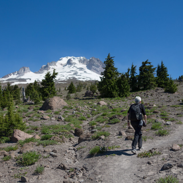 """Lady hiker walking on a trail on Mount Hood, part of the Cascade Range,..."" stock image"