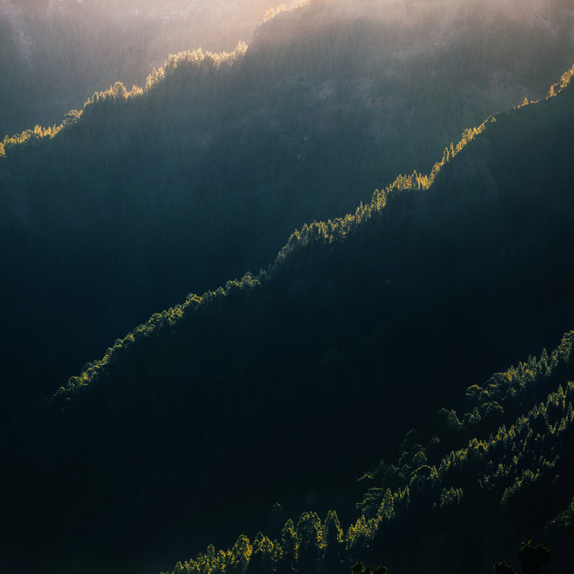 """""""Forest on the hills in the morning, Tenerife"""" stock image"""