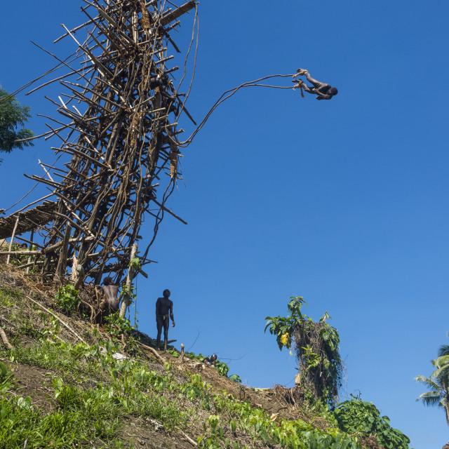 """Man jumping from a bamboo tower, Pentecost land diving, Pentecost, Vanuatu"" stock image"