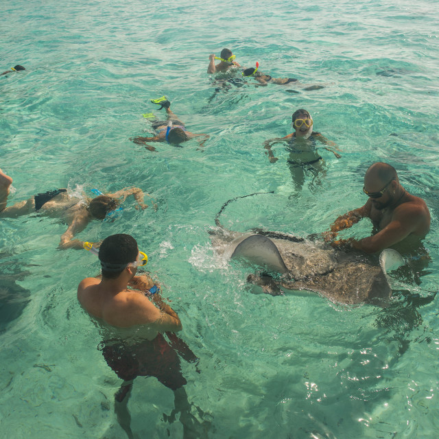 """Tourists swimming with sting rays, Bora Bora, French Polynesia"" stock image"