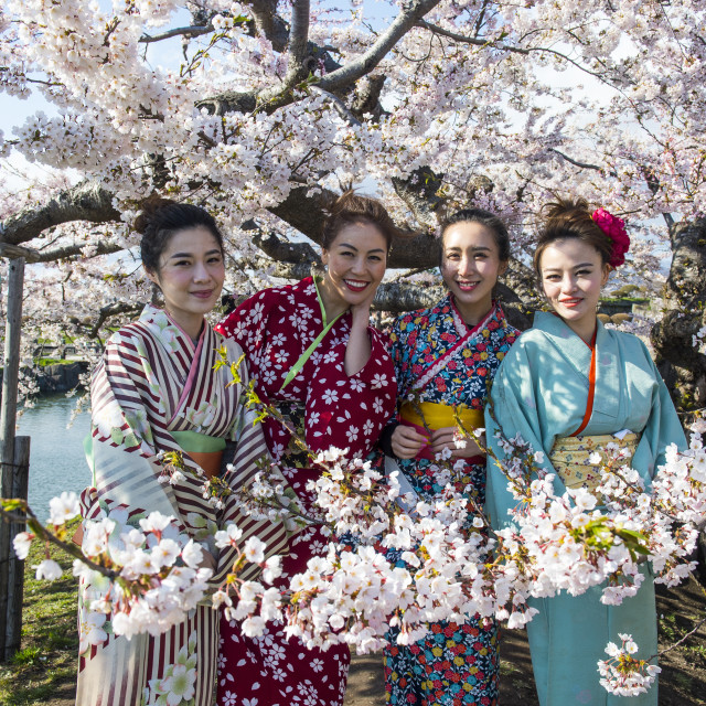 """Women dressed as Geishas standing in the blooming cherry trees, Fort..."" stock image"