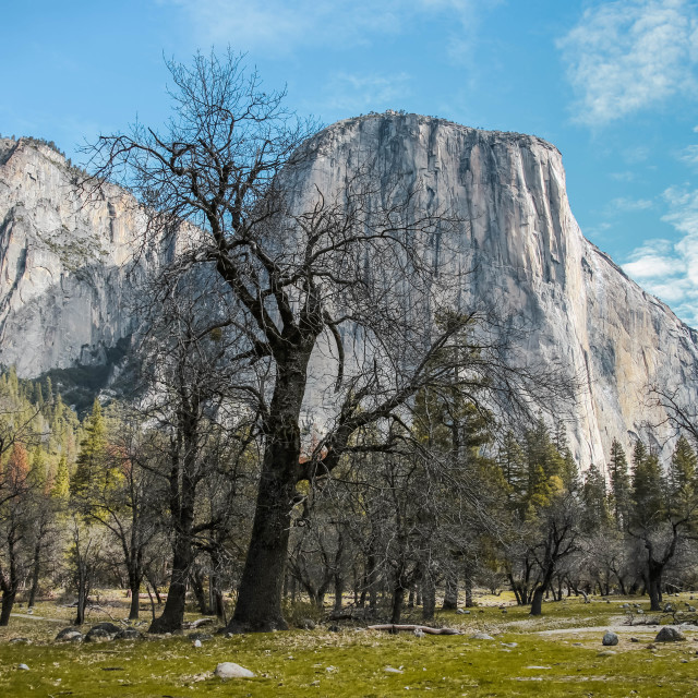 """El Capitan, Yosemite National Park"" stock image"