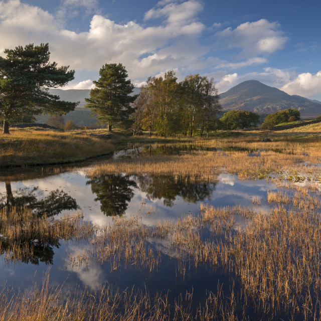 """""""Kelly Hall Tarn and the Coniston Old Man, Lake District, Cumbria, England...."""" stock image"""