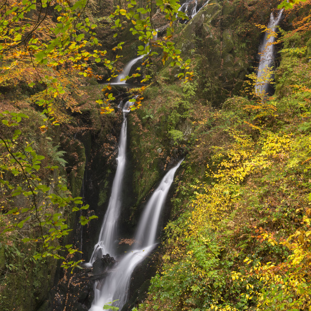 """""""Stock Ghyll Force waterfall cascading through autumnal woodland, Lake..."""" stock image"""