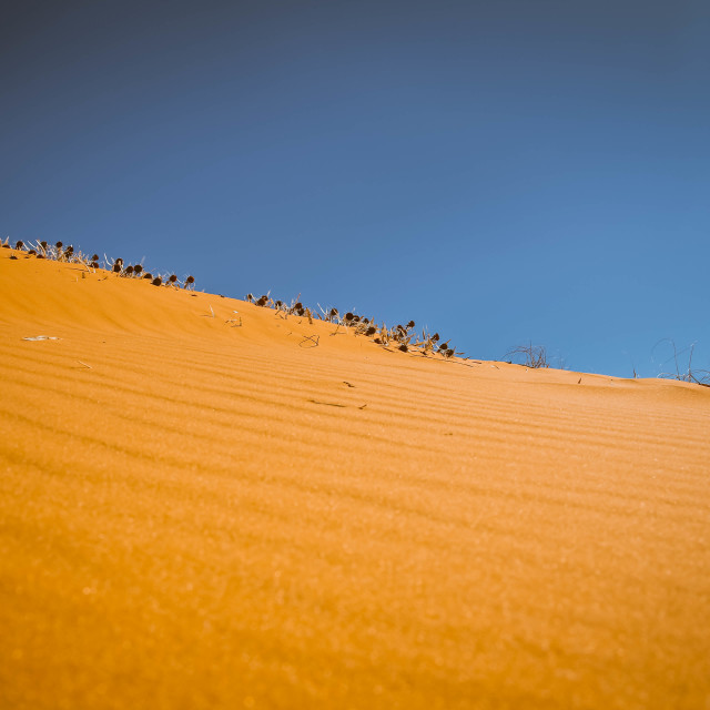 """""""Coral Pink Sand Dunes State Park"""" stock image"""