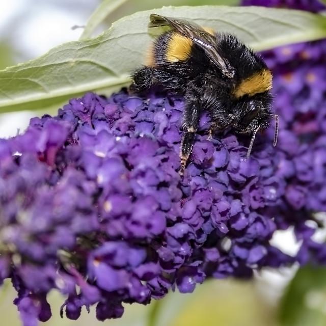 """""""Bumble Bee I"""" stock image"""