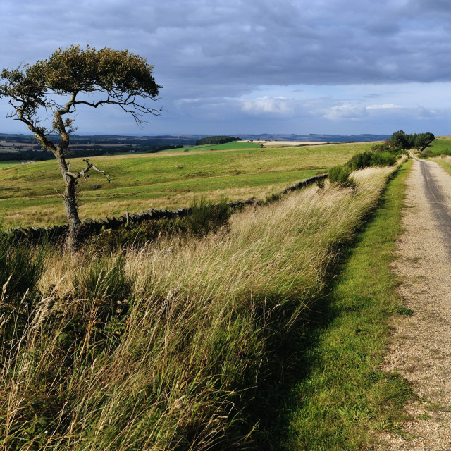 """Near Waskerley, County Durham on C2C cycle route"" stock image"