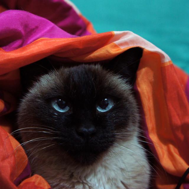 """""""Curious Cat (2)"""" stock image"""