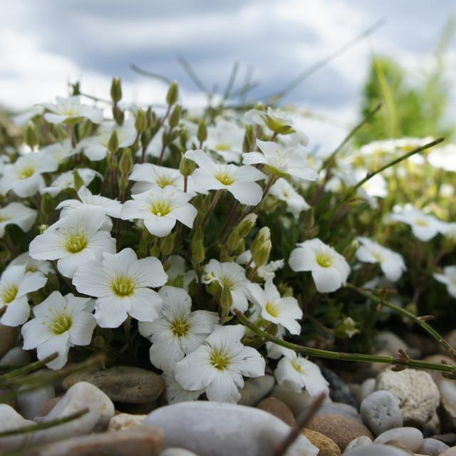 """Little Daisies Bouquet"" stock image"